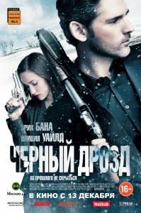 Черный дрозд 2011